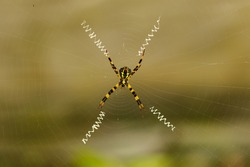 A spider in the middle of its web with blur background