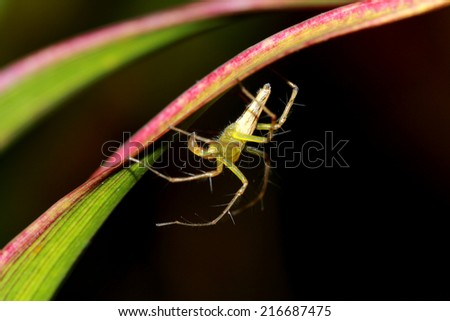 A spider on leaf #216687475