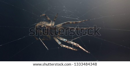 A spider picture from below. This macro picture was captured during night