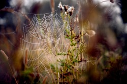 A spider's web, hung with morning dew, stands out against an autumnal background.