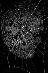a spider web