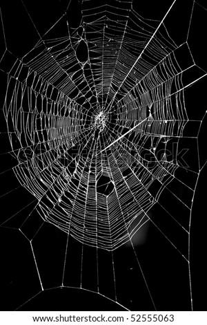 a spider web #52555063