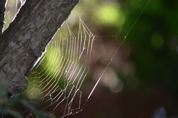 A spider web hanging at the edge of a branch.