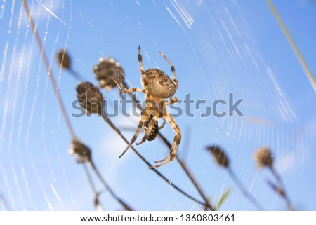 Stock Photo A spider web in nature background. spider caught a fly. spider web with spider and its prey