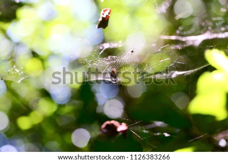 Stock Photo A spider web in nature background. spiderweb or cobweb is a device created by a spider out of proteinaceous spider silk extruded from its spinnerets. generally meant to catch its prey.