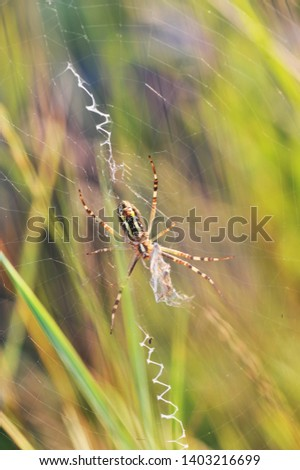 A spider web in nature background. spiderweb or cobweb is a device created by a spider out of proteinaceous spider silk extruded from its spinnerets. generally meant to catch its prey. #1403216699