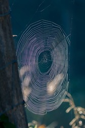 A spider web in the forest, a spider at dawn, a trap for insects, a beautiful spider web like an internet web