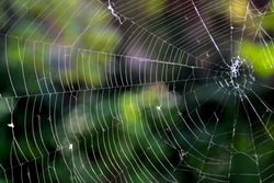 a spider web with no spider