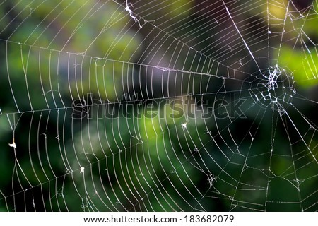 a spider web with no spider #183682079