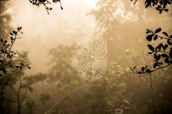 A spiderweb in a foggy morning at sunrise.