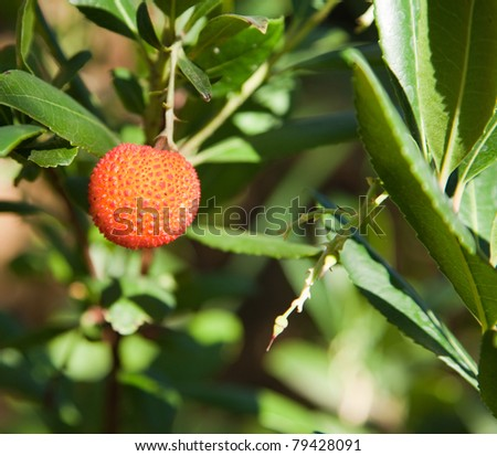 A spiky textured lychee fruit glows bright orange with tips of red lit by the sunshine against a blurred background of  leaves.