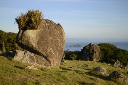 a split rock on a large hilltop field of volcanic boulders. Round shaped, with flax plants that are housed on it. You can see an Island close, and the ocean. This photo was taken in Waiheke Island.