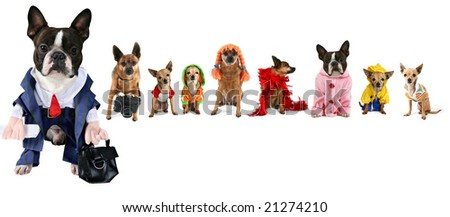 a spoof on the business images but with dogs - stock photo