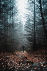 A sporty female hiker girl exploring the moody and mystic mountain nature with foogy cold winter weather. Outdoors in the cold with mist and dark dramatic vibes. Harz National Park in Germany