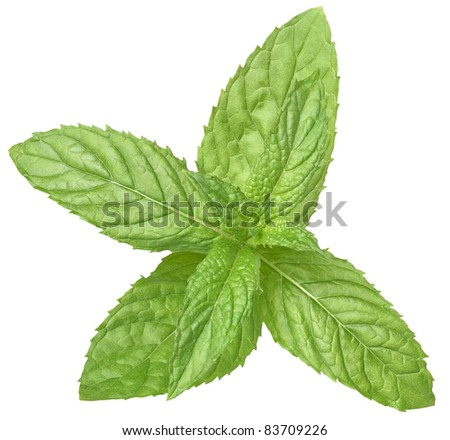 A sprig of mint on a white background - stock photo