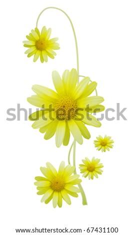 A spring daisy symbolic