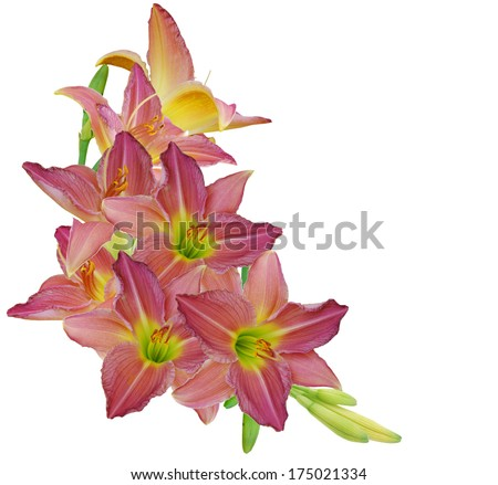 A spring day lily bouquet