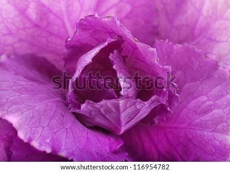 A spring decorative cabbage is in a bouquet, floral background