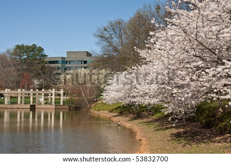 A springtime view of a lake at an office park