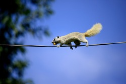 A squirrel are climbing wires