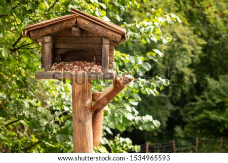 A squirrel hangs from a birdhouse #1534965593