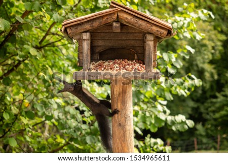 A squirrel hangs from a birdhouse #1534965611