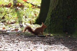 a squirrel on the forest floor