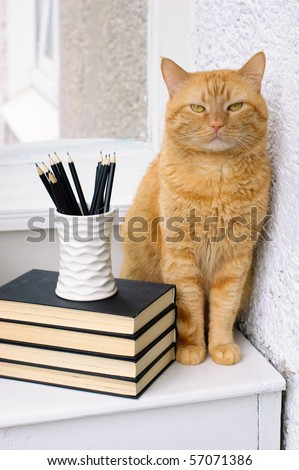 A stack of books, pencils and a big red cat on a white table