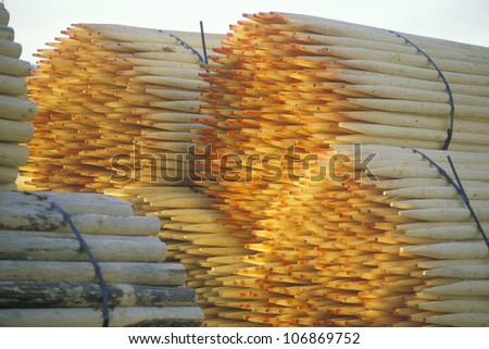 A stack of bundled fence posts with sharpened ends