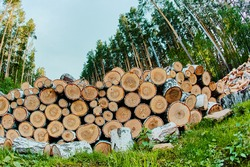 a stack of logs with deciduous trees, a view of the various ends of logs in the stack, brown logs
