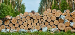 a stack of logs with deciduous trees; a view of the various ends of logs in the stack; brown logs. Banner