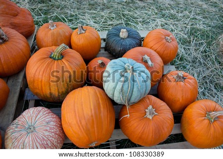 A stack of pumpkins of different colors in a field