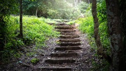 A staircase leading out of a forest