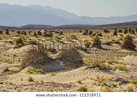 A stalk of plant in the Devil's Cornfield in Death Valley National Park, California