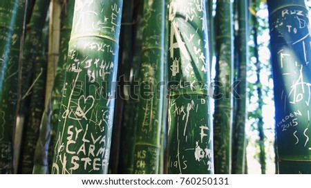 A stand of Bamboo shoots with etched graffiti                 #760250131