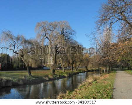 A stand of weeping willows in winter along the banks of the Christchurch Avon river,at Hagley Park,New Zealand