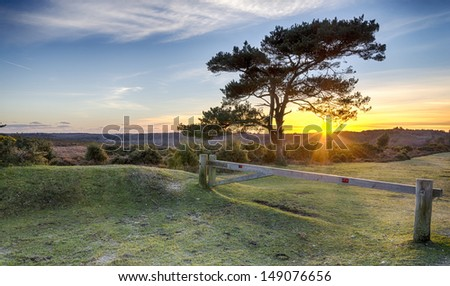 A starburst of sunlight Through a Scots Pine tree at Bratley View in the New Forest National Park in Hampshire