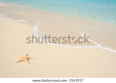 A starfish besides sea shore on a beach with white sand and blue water.