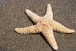 A starfish on a sandy beach