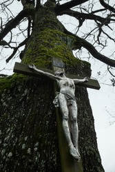A statue of the crucified Jesus Christ mounted on a tall tree. Dramatic photography. Crucifix on a tree, bottom view. Statue of Chirst fixed to a cross.