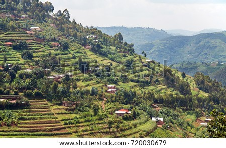 A steep hill in the Muvumba river valley in Rwanda, entirely covered with terraced fields and dotted with houses.