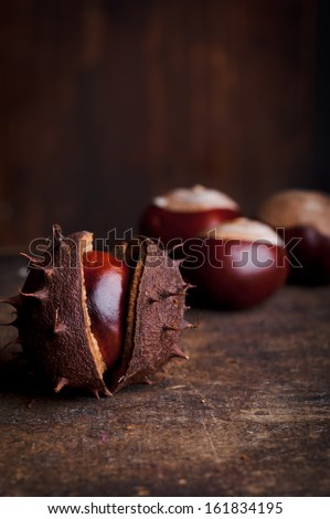 A still life of Conkers the seeds of the Horse chestnut tree