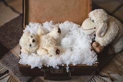 A still life picture with stuffed bear and sheep toys