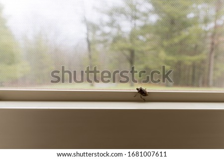 Photo of  A stink bug on the inside of a window in a home in the wilderness. The Mamorated Brown Stink Bug invaded the United States in the mid 1990's.