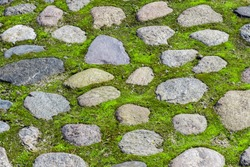 A stone road covered with green moss