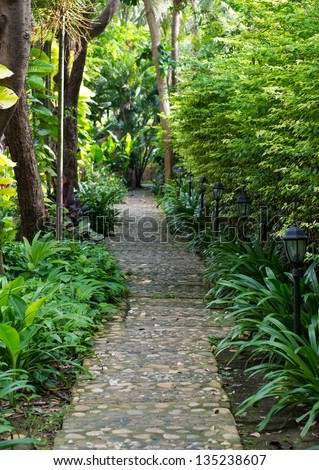 A stone walkway in tranquil garden