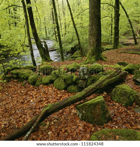 A stone wall covered with moss, Skane, Sweden