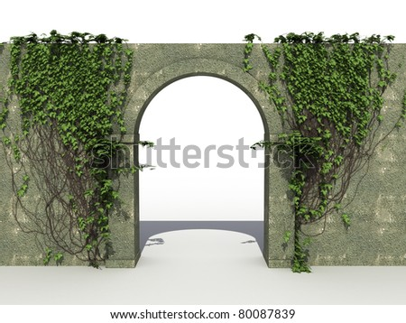 A stone wall with ivy