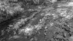 A stoney creek bed with shallow water and thickly wooded shores, rendered in monotone