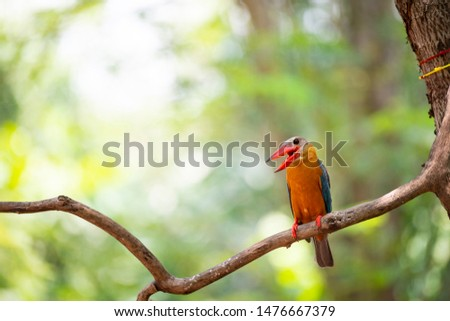 A stork - billed kingfisher is perching on a tree branch .